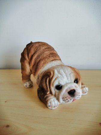 Kutya-Bulldog-angol-félig fekvő pózban