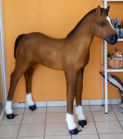 Ló-145 cm/csikó/világos barna
