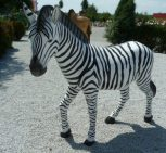 teve, zebra, zsiráf
