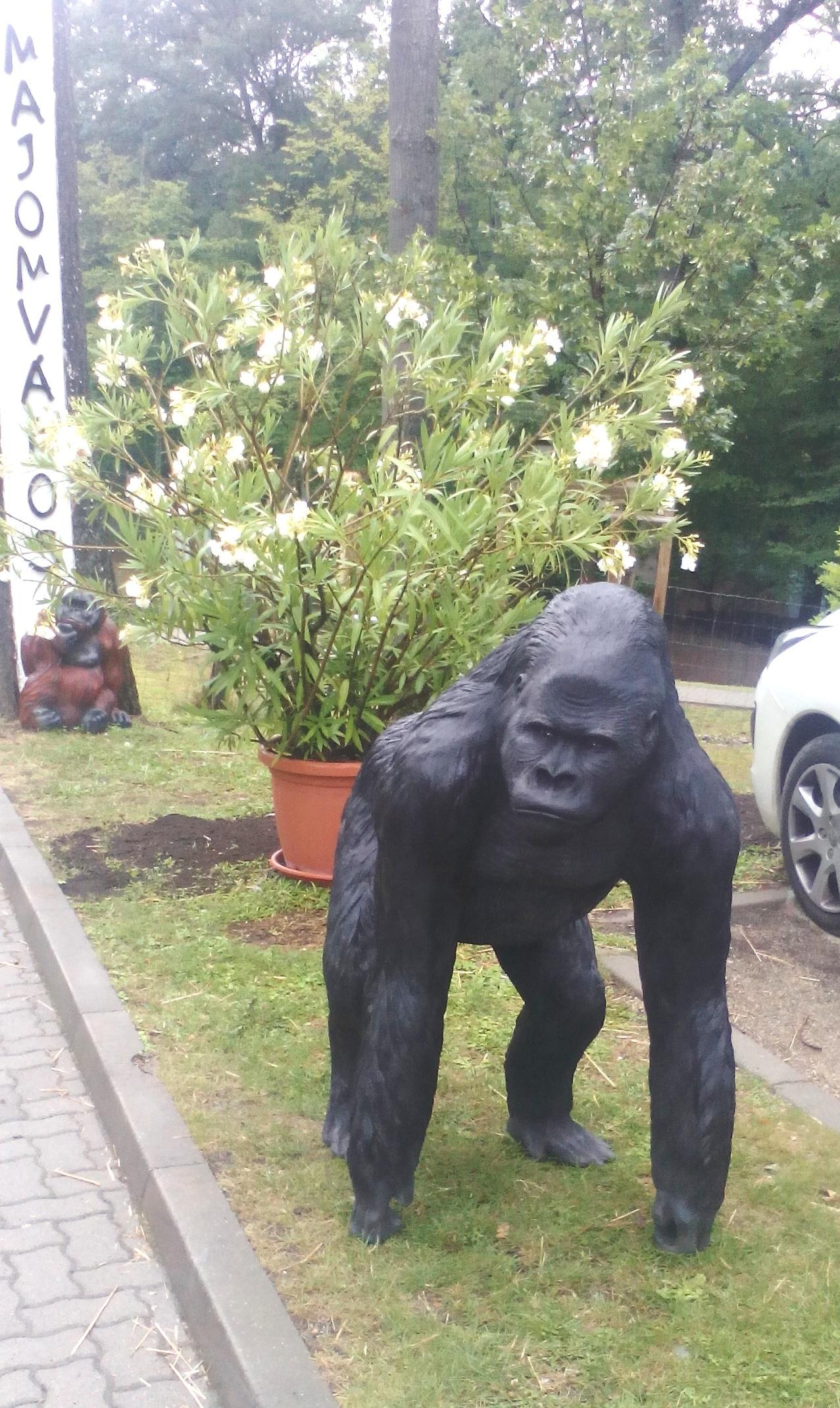 Gorilla 1.